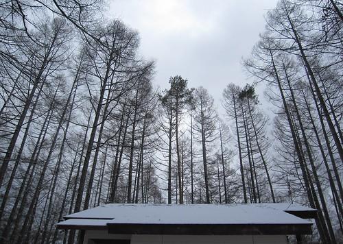 今日は曇り空 2013.12.12 by Poran111