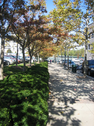 Image of County Street Trees