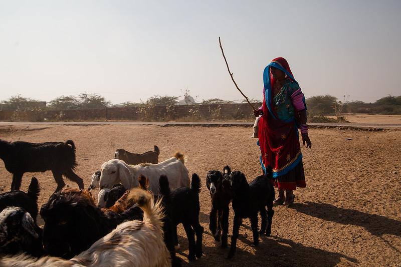 Rural Rajasthan Hannah Reyes