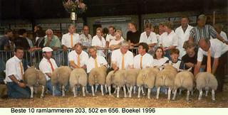 Ramlammeren 203 - 502 en 656 - 1996