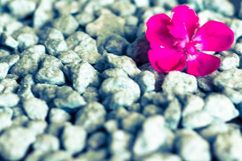 Sei un fiore che è cresciuto sull'asfalto e sul cemento