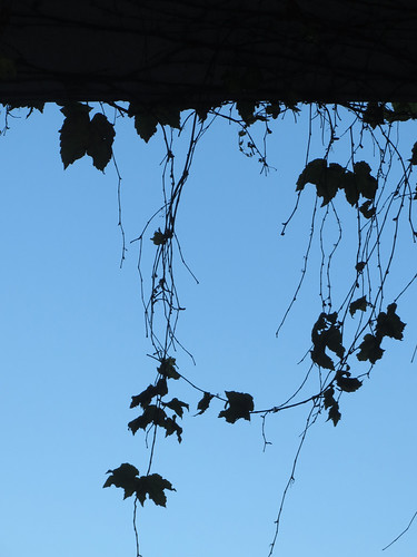 Hanging Ivy Leaves Silhouettes Photo by Sherrie Thai of ShaireProductions.com