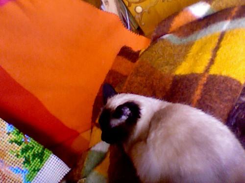 lillepoes op deken