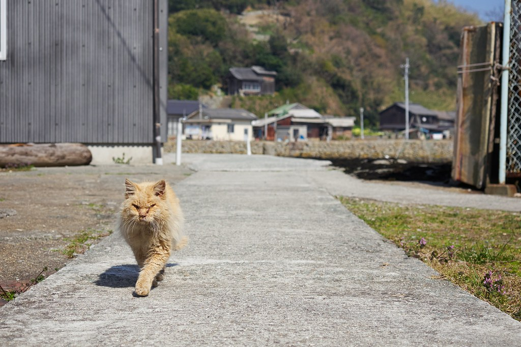 Visit Aoshima Island, The Famous Island of Cats