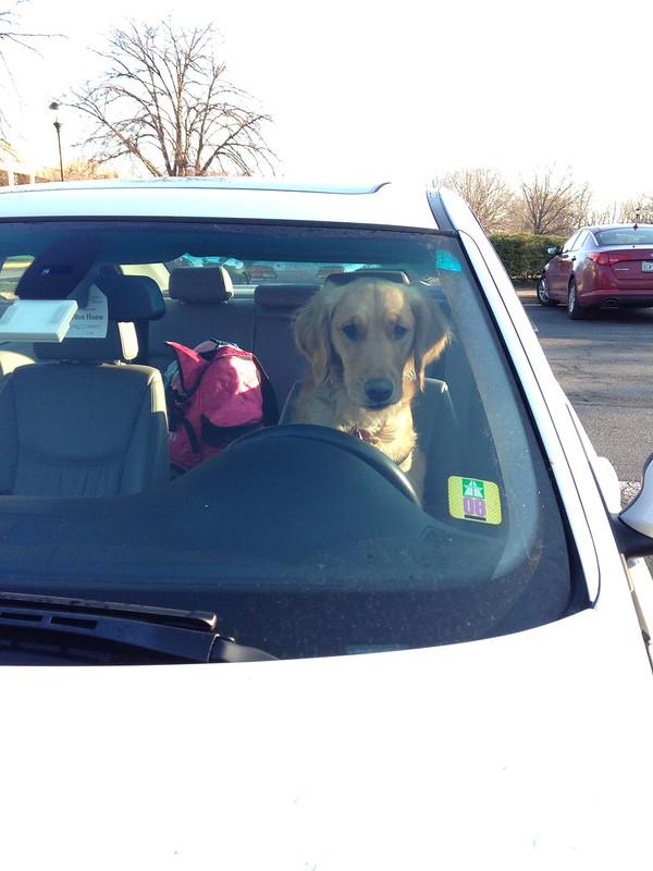 Penny drives a car