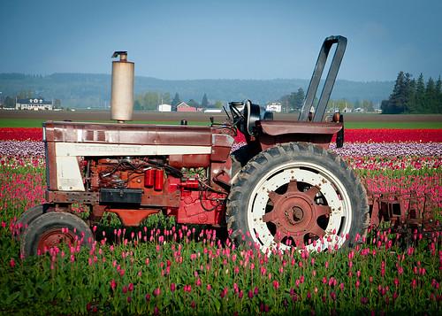 04-20-14 Tulip Tractor