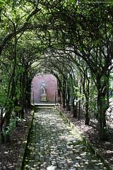 Glen Burnie Gardens - Pleached Alee