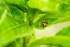 Web High Line closeup 3 ladybug