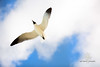 Jonathon Livingston Seagull