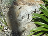 Great Glasshouse - National Botanic Garden of Wales - Rock Art in the Great Glasshouse - South Africa - Khoikhoi