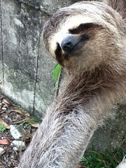 otter(0.0), wildlife(0.0), animal(1.0), three toed sloth(1.0), zoo(1.0), mammal(1.0), fauna(1.0),