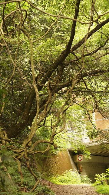 03_tree_2