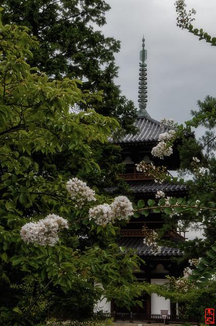 「百日紅咲く」 法起寺 - 奈良