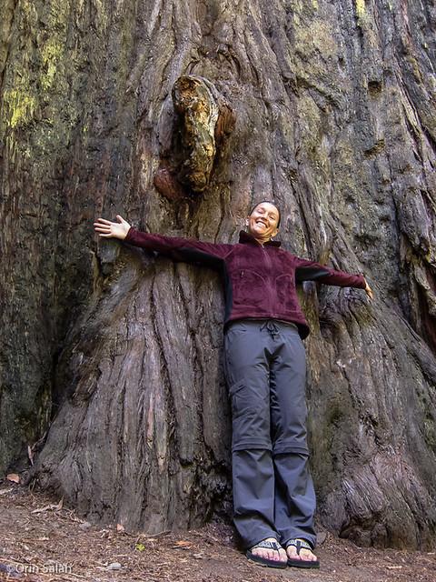 05Jul2013_redwoods-2630