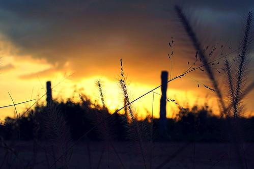 sunset sun blur nature beauty sunrise landscape dawn evening path sony dslr hyderabad twigs 2870mm telangana a37 sonyalpha mrigank alpha37 sonya37 mrigankgupta flickr12days yahoo:yourpictures=duskdawn
