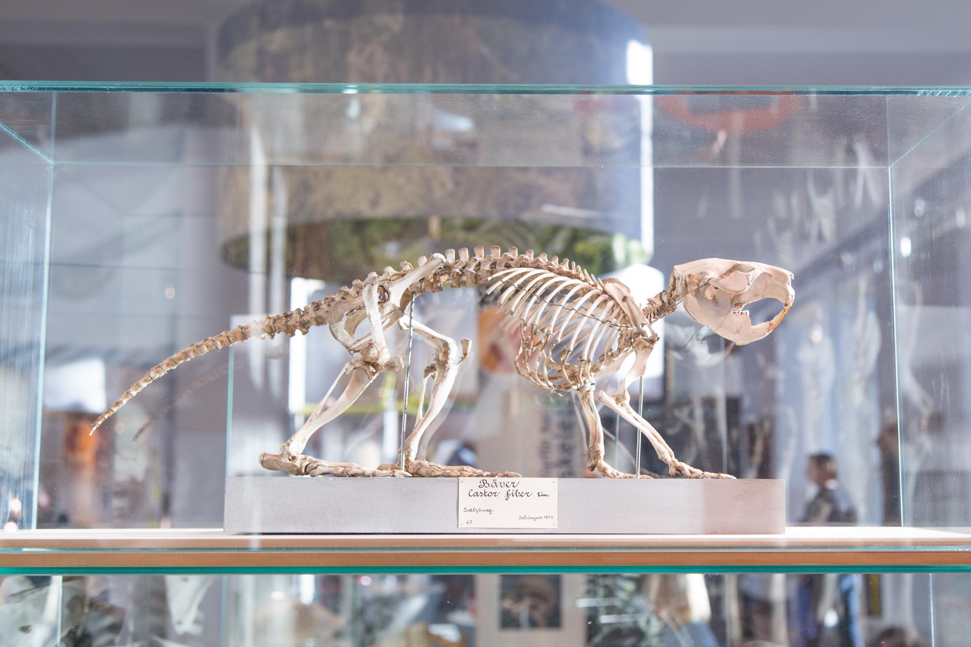 Naturhistoriska Riksmuséet