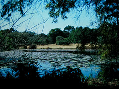 Harare Botanical Gardens