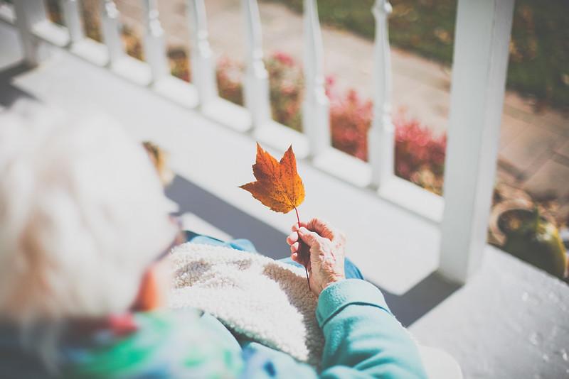 Leaf // Day 7