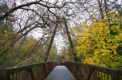 Toronto: Serena Gundy Park