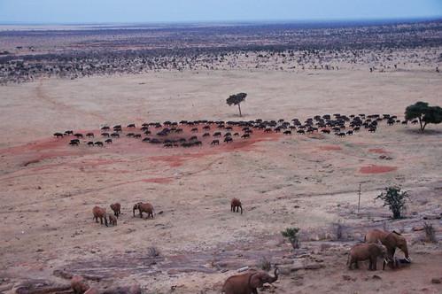 holiday elephant kenya lodge east safari elefant kenia ost tsavo reise tsavoeast voi tsavoost voisafarilodge