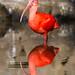 水鏡 - Synmetorical reflection on the water -