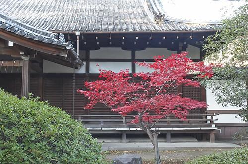 【写真】2013 紅葉 : 上御霊神社/2020-07-01/IMGP4170