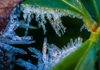 Frost in the Periwinkle