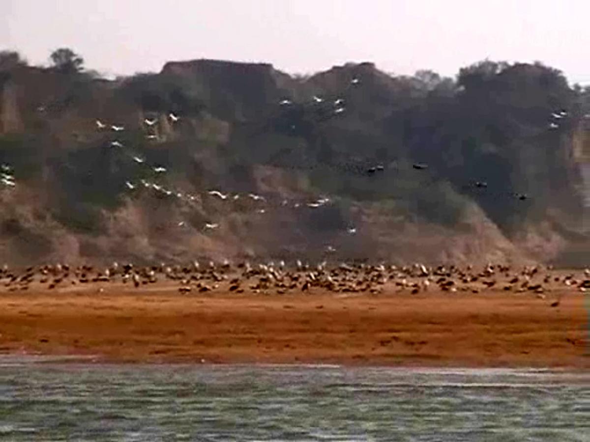 चंबल घाटी से रूठे प्रवासी पक्षी
