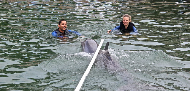 Swimming with Dolphins - Key Largo, Florida - pole trick