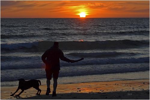 sunset orange dog chien mer beach silhouette twilight crépuscule plage manche jeux scènesdevie