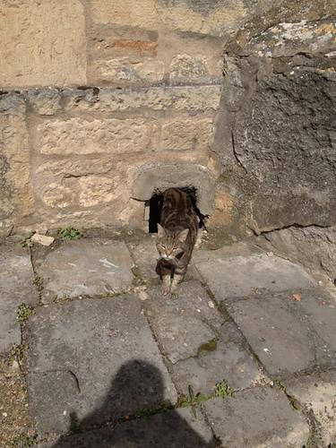 穴から出てきた猫
