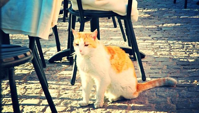 Visby cat II