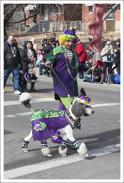 Barkus Parade 2014-02-23 7