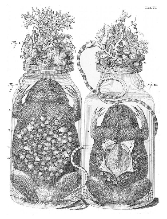 embalming jar ruysch