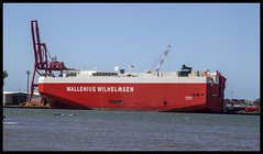Freighter Wallenius Wilhelmsen in Brisbane-1=