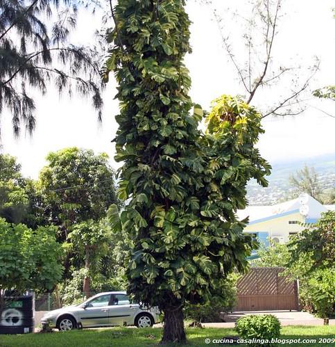 Baum mit Schlingpflanze StPaul klein copyr