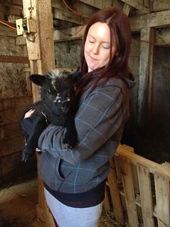 Lamb Cuddling