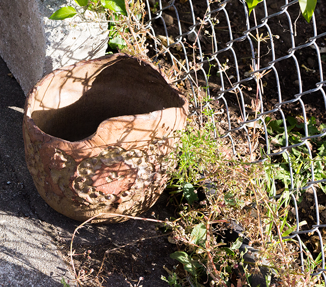 sunshine, pottery, and a chain-link fence // neighborhood garden shots