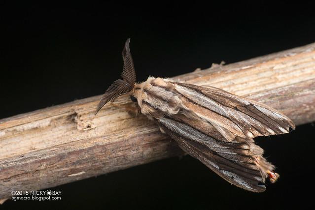 Moth - DSC_4717