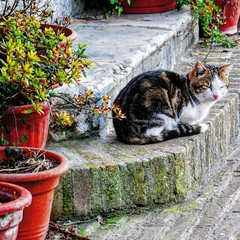 #cat #gatto #ig_nature #igersitalia #ig_europe #subhanAllah #sunday #picoftheday #photography #statigram #instagram #italy #picture #animals #plants #awesome #city #stairs