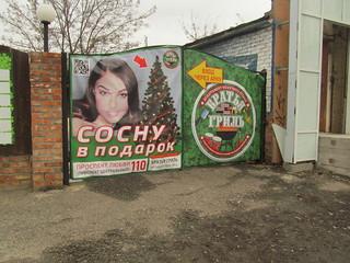 Sosnu_v_podarok 010