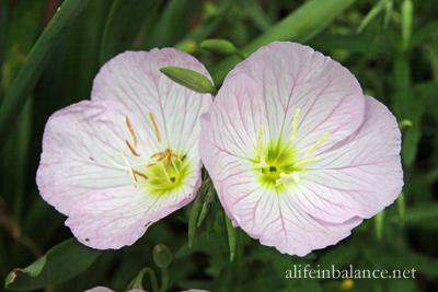 flowers-garden-spring-5
