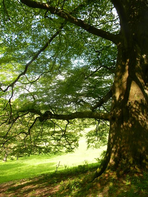 Tree near Sting's pad