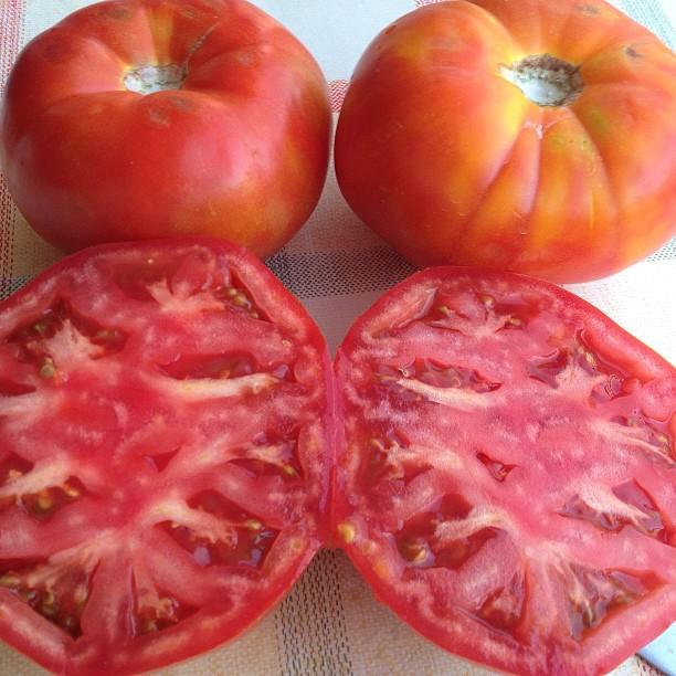 Tomates variedad Muchamiel (Alicante) vaya tela... deliciosos a 0'90€ el kilo #TomatesplasticoNO