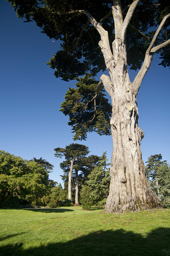 SFBG trees
