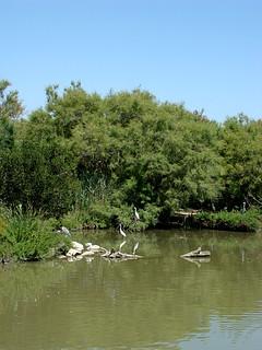 027 boom met vogels
