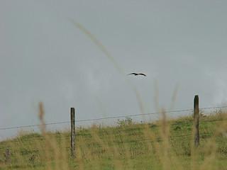 58 pogingen om roofvogel te fotograferen