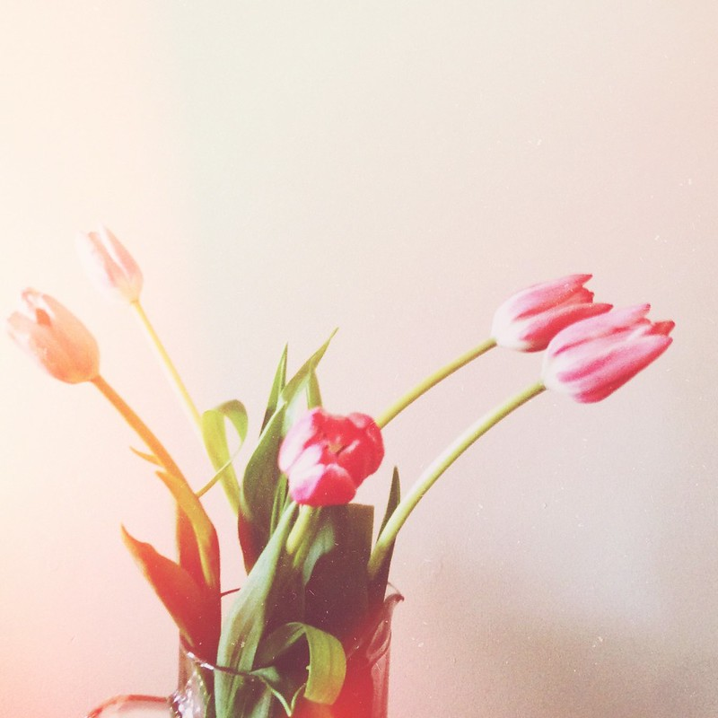 Snapshots // September 9 ~ Flowers heal me. Tulips make me happy.