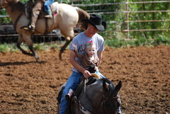 animal sports, western riding, team penning, soil, equestrian sport, sports, reining, traditional sport,