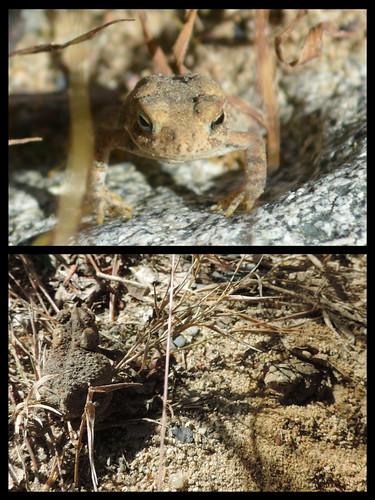 boyden toad flip